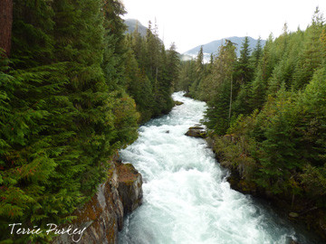 Cheakamus River photo by Terrie Purkey