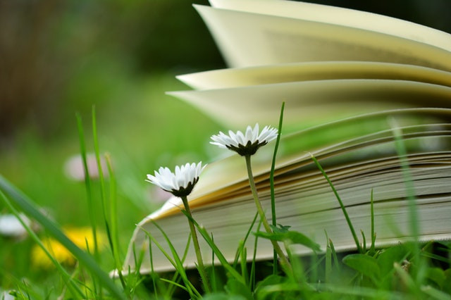 book and grass image from pexels.com