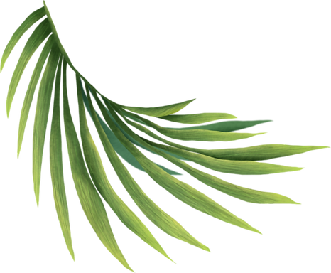home-hero-accent-frond-728x600.png