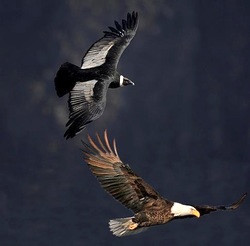 When the Condor of the South and the Eagle of the North a new day will awaken!