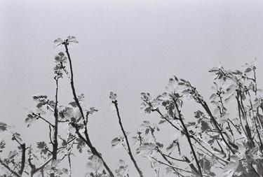 Plants in the sky -  May 2020-1.jpg