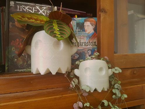 Ghost Plant Pot
