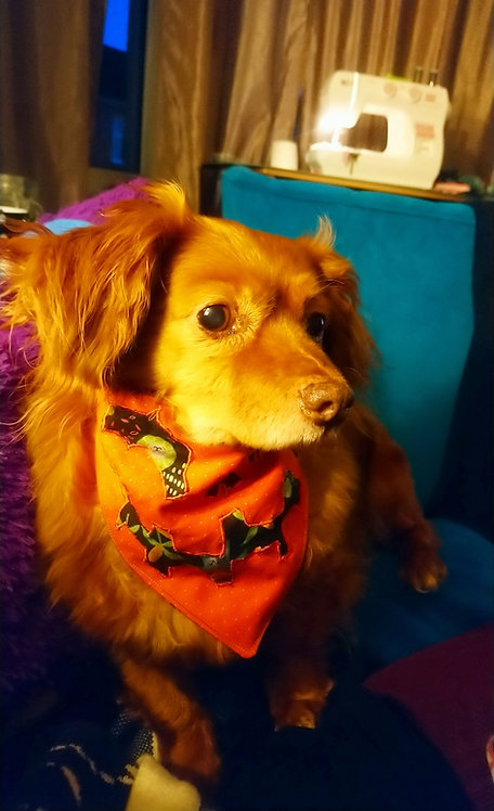 Embroidered Spooky Puppy Bandana