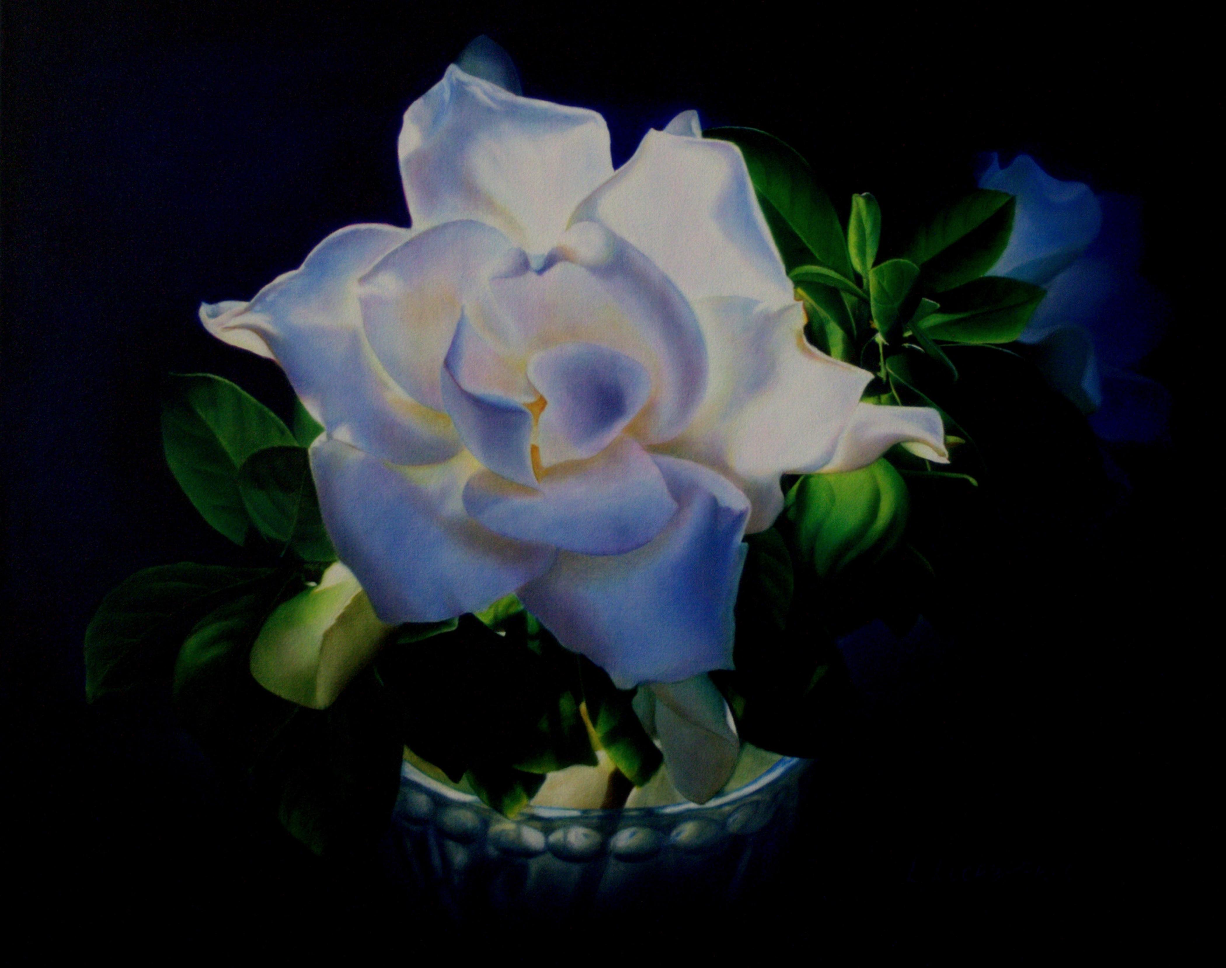 Mama's Gardenia