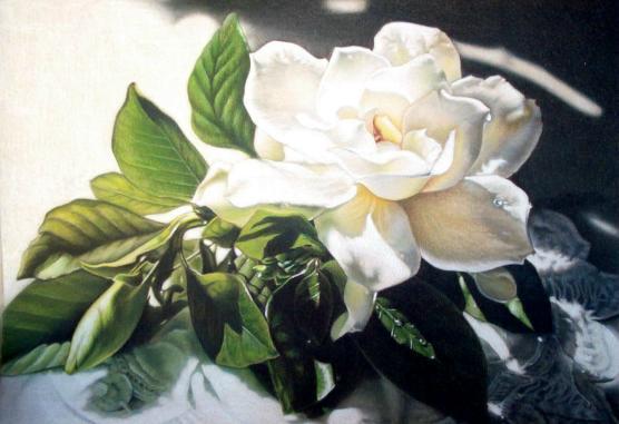 Sandy's Gardenia