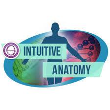 Anatomie Intuitive
