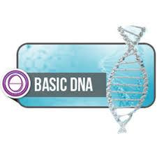 ADN Base
