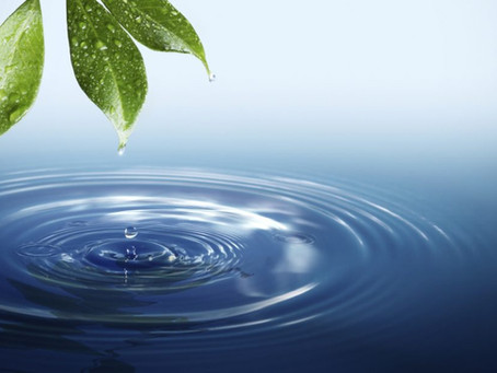 Water Audits: Protect Natural Resources from Home