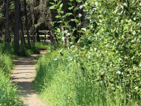 Blazing Trails at the Oldmans Creek Preserve