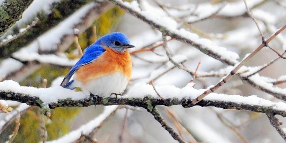 Winter Birds and Botany Walk