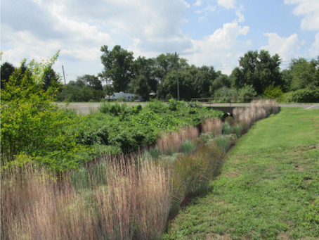 Natural Protection: How a Simple Strip of Plants Can Reduce Water Pollution