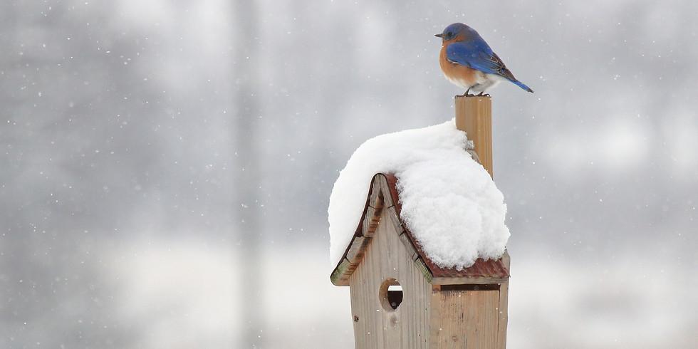 Winter Bird Walk