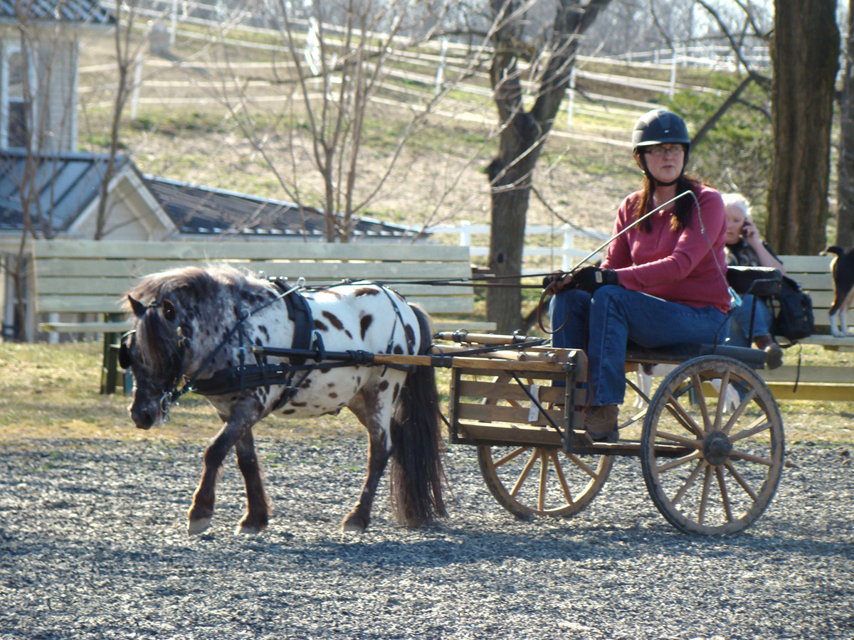 charming-creek-farm-pony-tales-driving.j