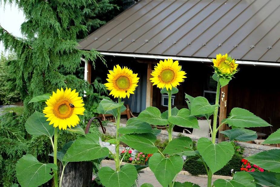 -summer-charming-creek-farm (2) - Copy.j