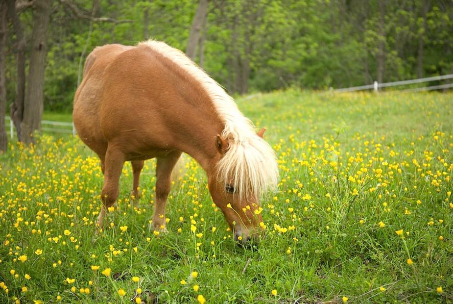 charming-creek-farm-pony-tales-- (9).jpg