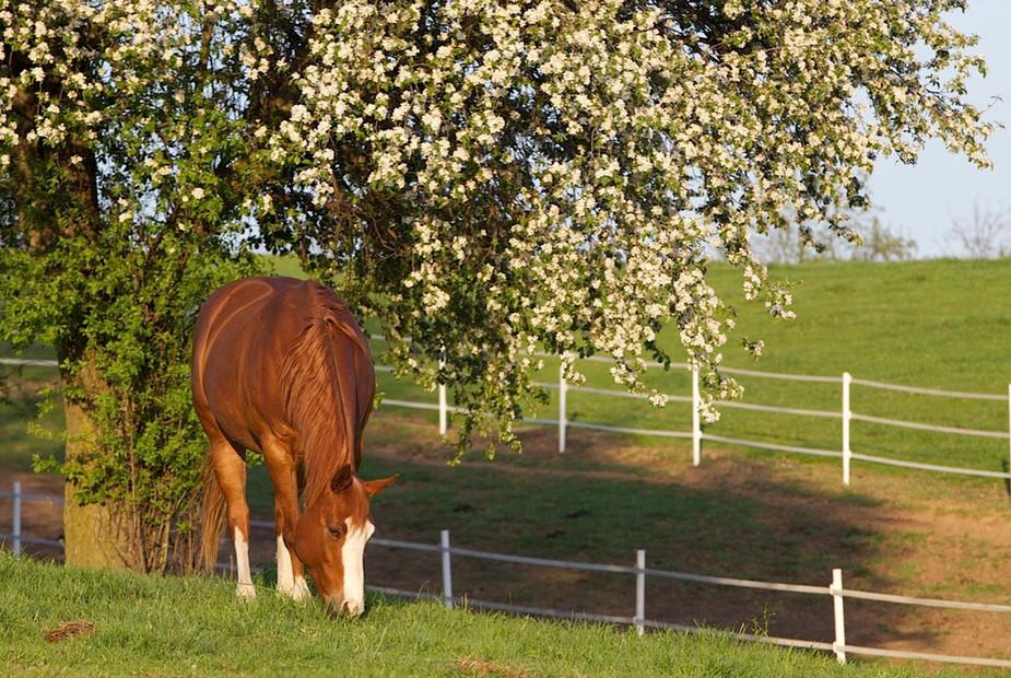 grazing-under-tree.jpg