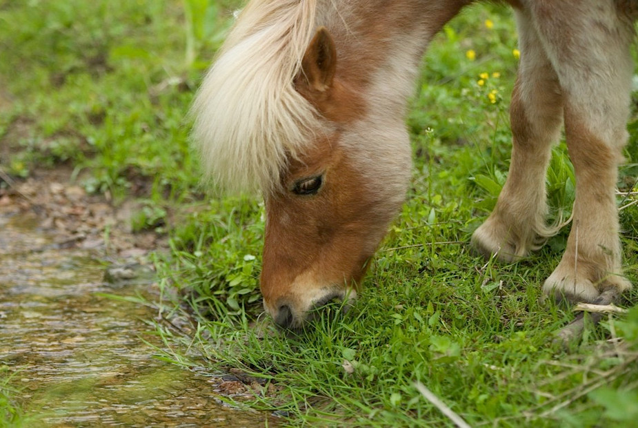 charming-creek-farm-pony-tales-- (11).jp