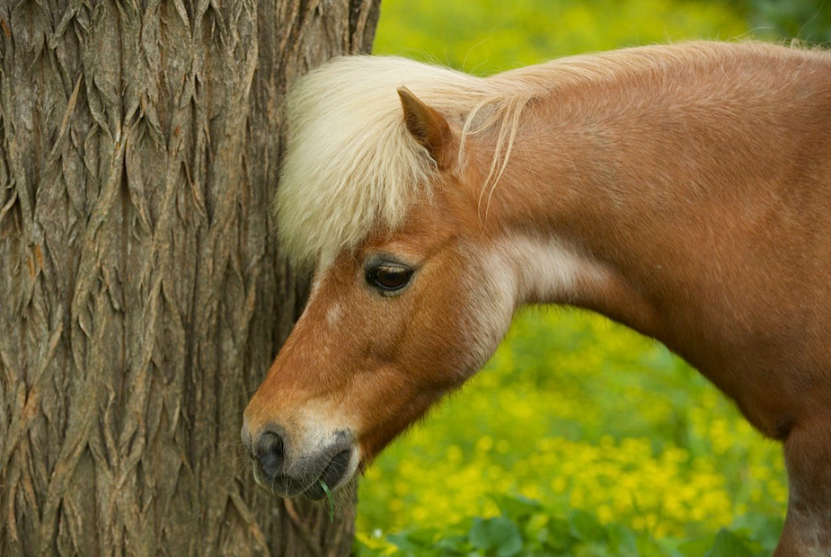 charming-creek-farm-pony-tales7.jpg