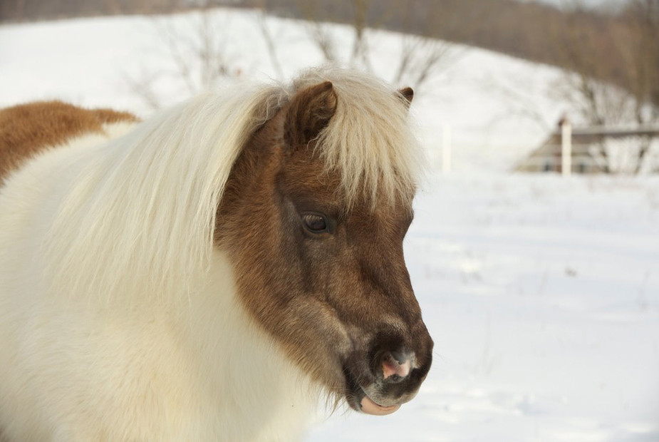 charming-creek-farm-pony-tales-- (4).jpg