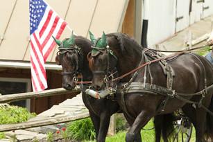 arabo-friesians-driving-american-flag.jp