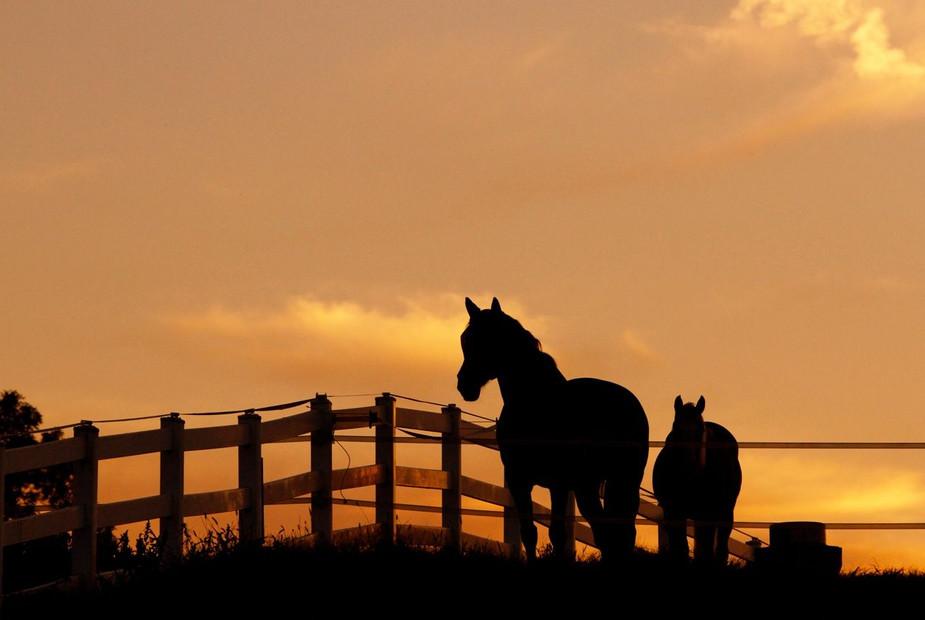 spring_charming-creek-farm-weddings-pony
