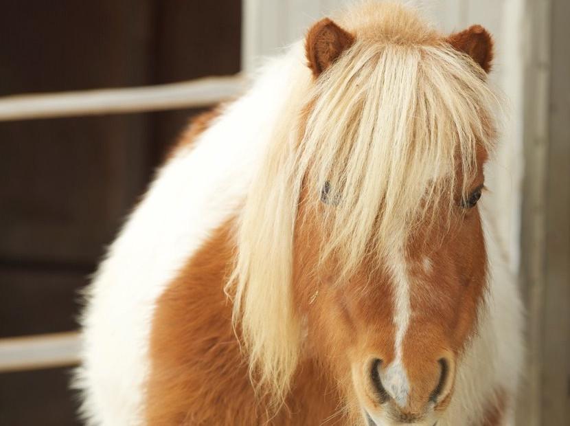 charming-creek-farm-pony-tales-- (1).jpg