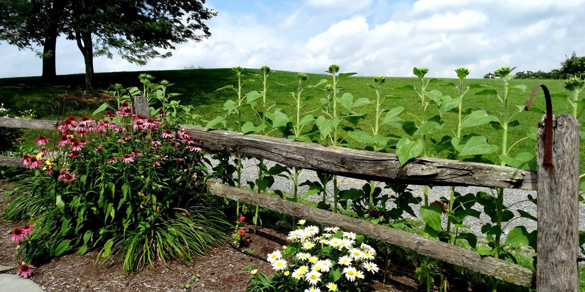 charming-creek-farm-summer (22).jpg