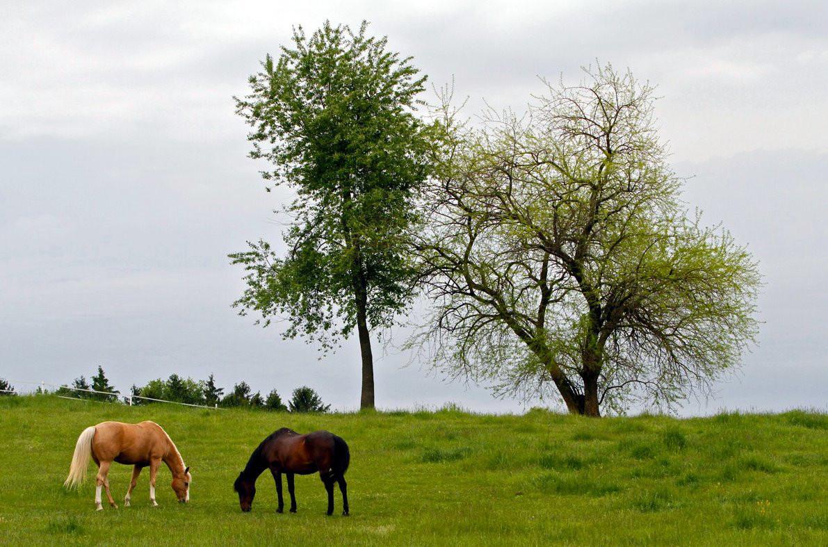 charming-creek-farm-grazing.jpg