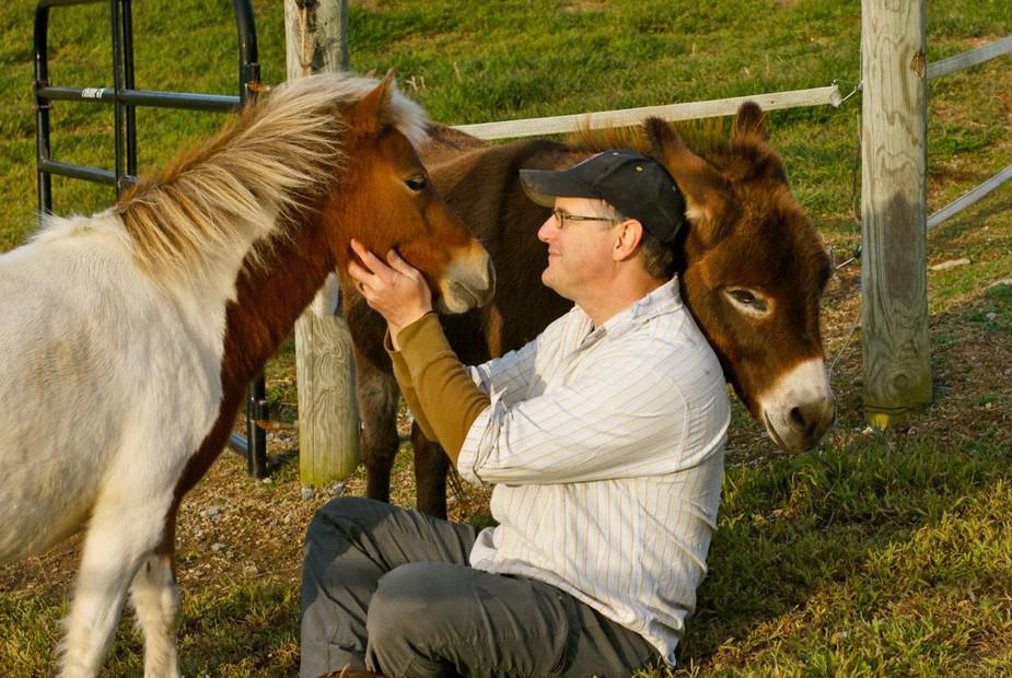 charming-creek-farm-pony-tales-mini-donk