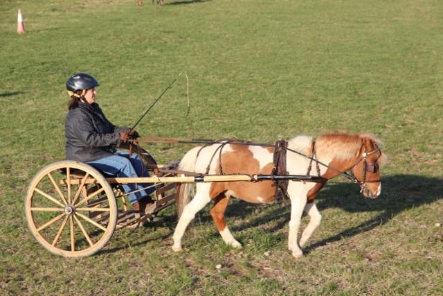 charming-creek-farm-pony-tales-- (1).jpe