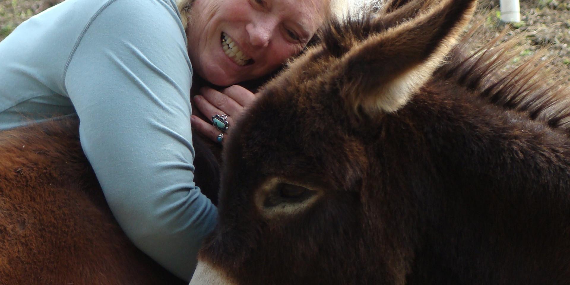 charming-crrek-farm-fall-images-horses (