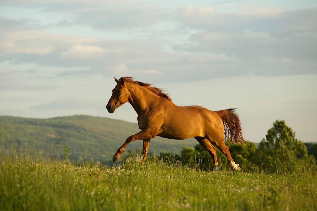 horse-at-liberty.jpg