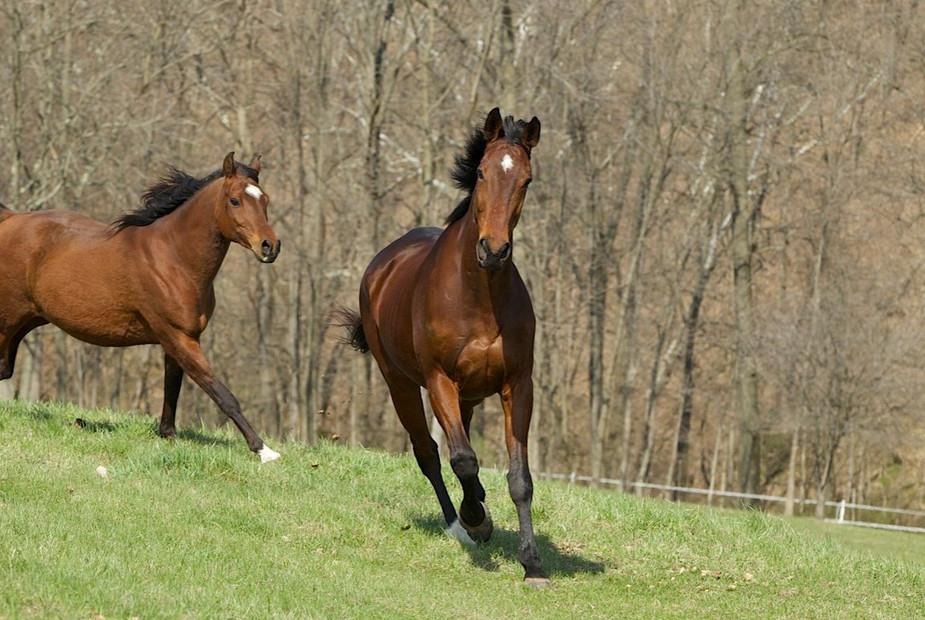 horse-play.jpg
