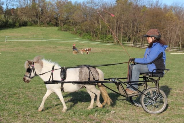 charming-creek-farm-pony-tales-- (18).jp