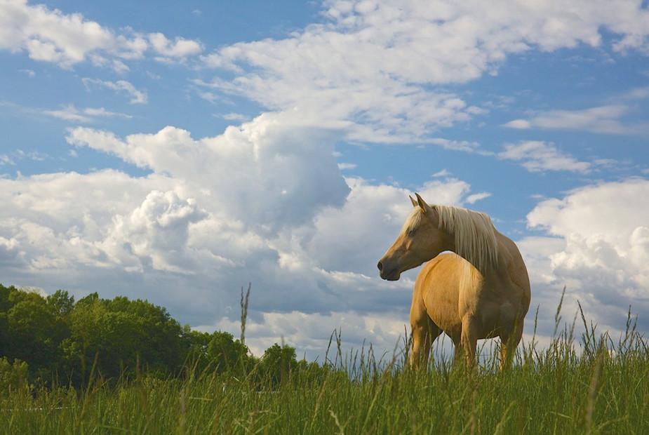 charming-creek-farm-blue-sky-clouds-.jpg
