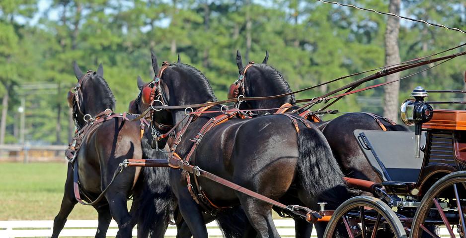 dragstra-stables-timberland-cde-2017-tea