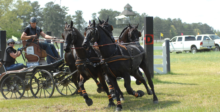 southern-pines-cde-2017-dragstra-stables
