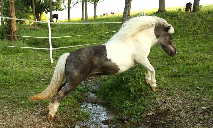 charming-creek-farm-pony-tales-- (14).jp