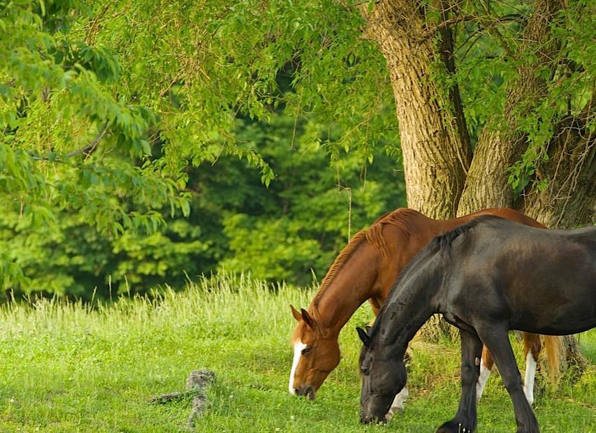 charming-creek-farm-grazing-.jpg