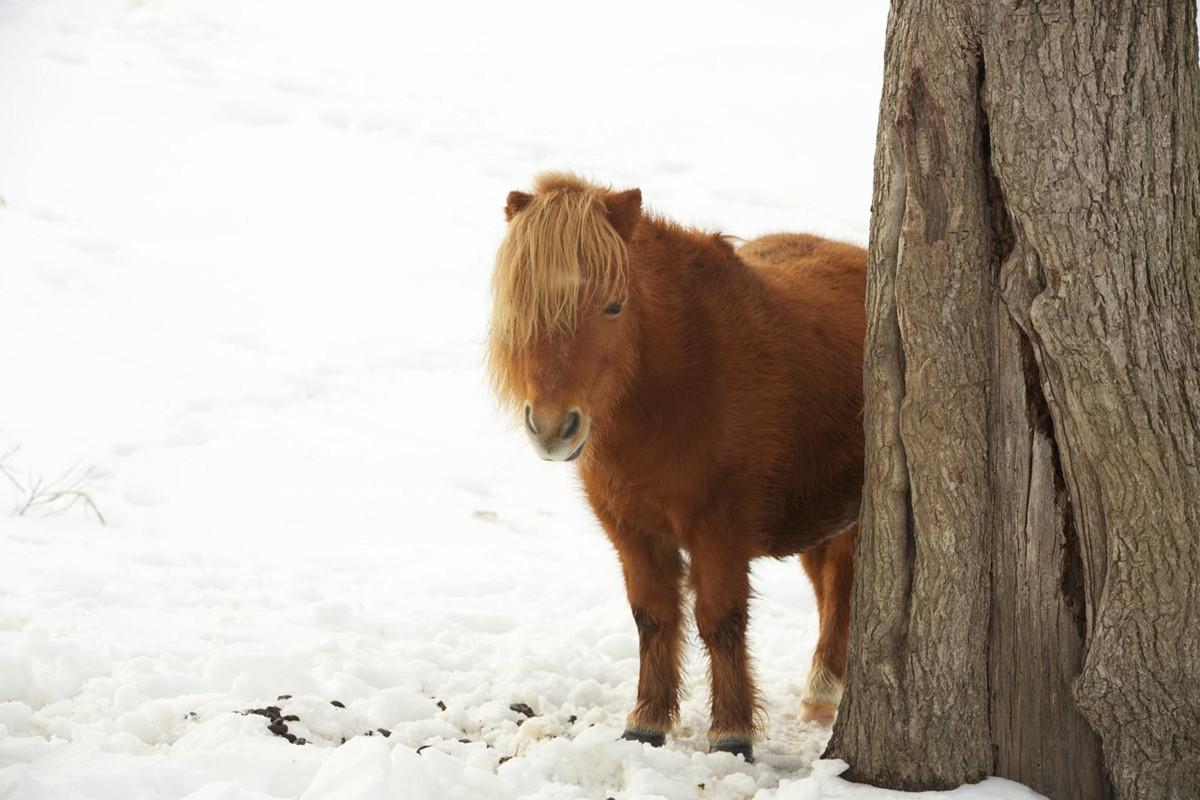 charming-creek-farm-pony-tales-- (8).jpg