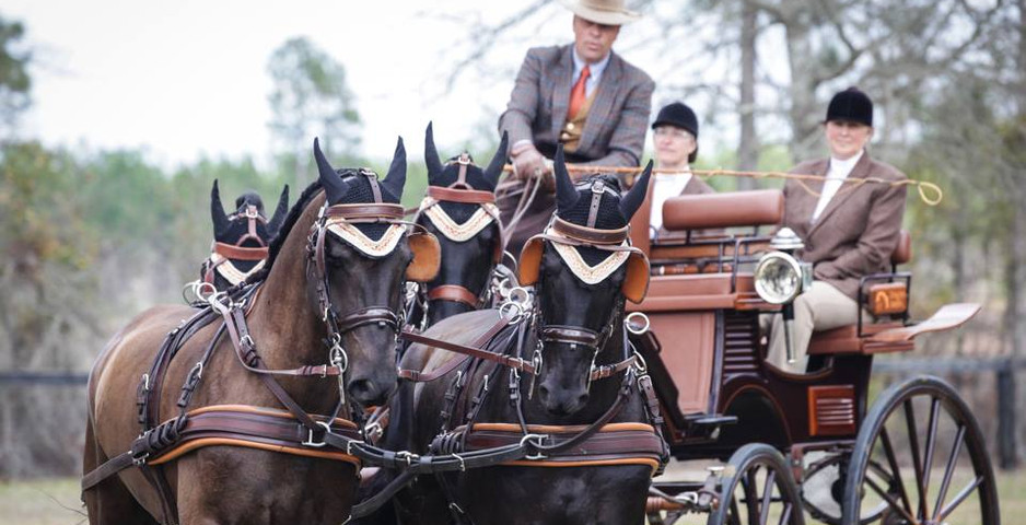 windsor-trace-2017-dragstra-stables-wate