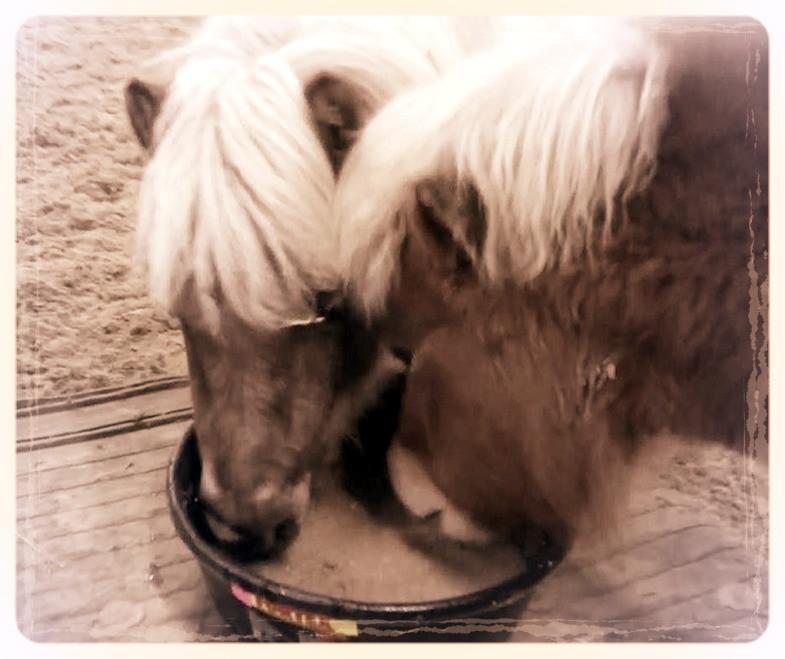 pony-gait-r-aid.jpg
