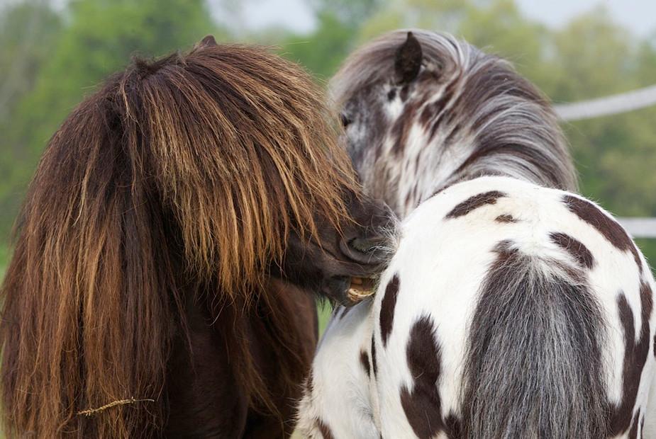 charming-creek-farm-pony-tales8.jpg