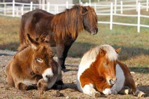 charming-creek-farm-pony-tales-- (20).jp