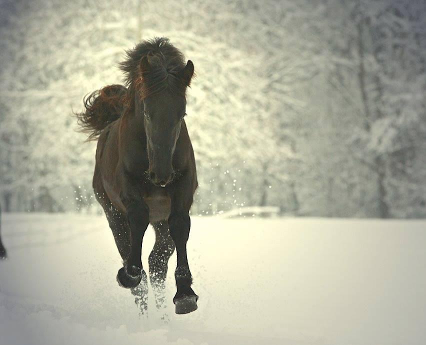 horse-running-in-snow.jpg