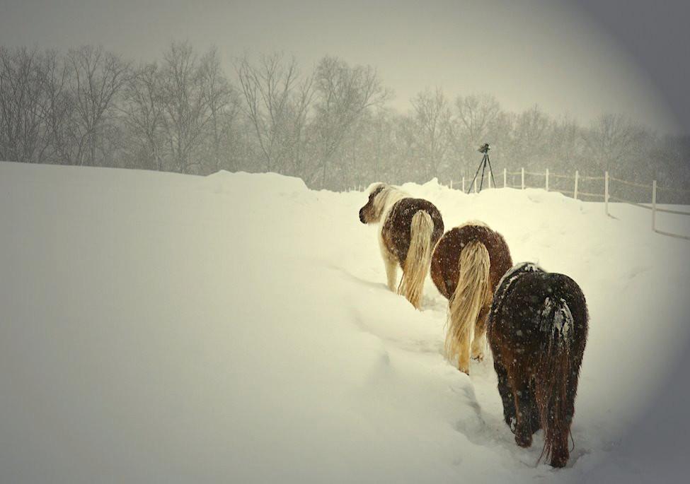 charming-creek-farm-pony-tales11.jpg