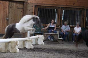 pony- entertainment.jpg