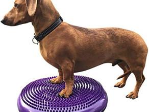 #edublog: i cani percepiscono lo spazio che occupano e il loro corpo? Cos'è la propriocezione?
