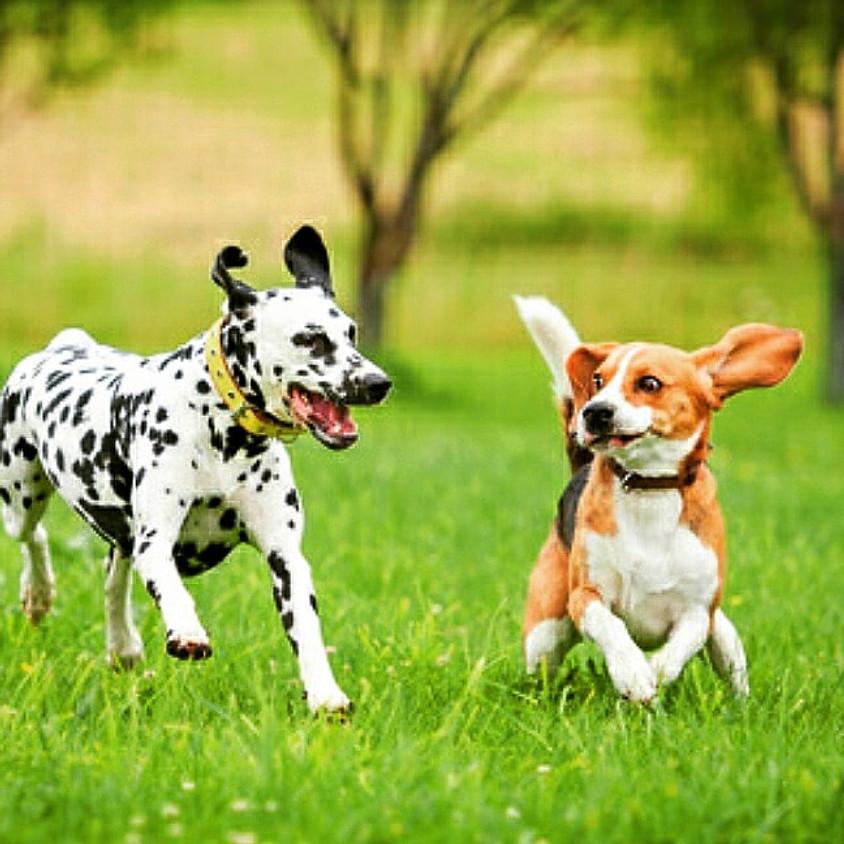 🌼🐶Comunicazione e socializzazione, cani e umani - con Valentina Armani 🌼🐶