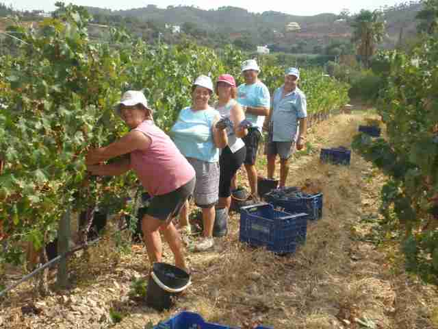 family grape pickers
